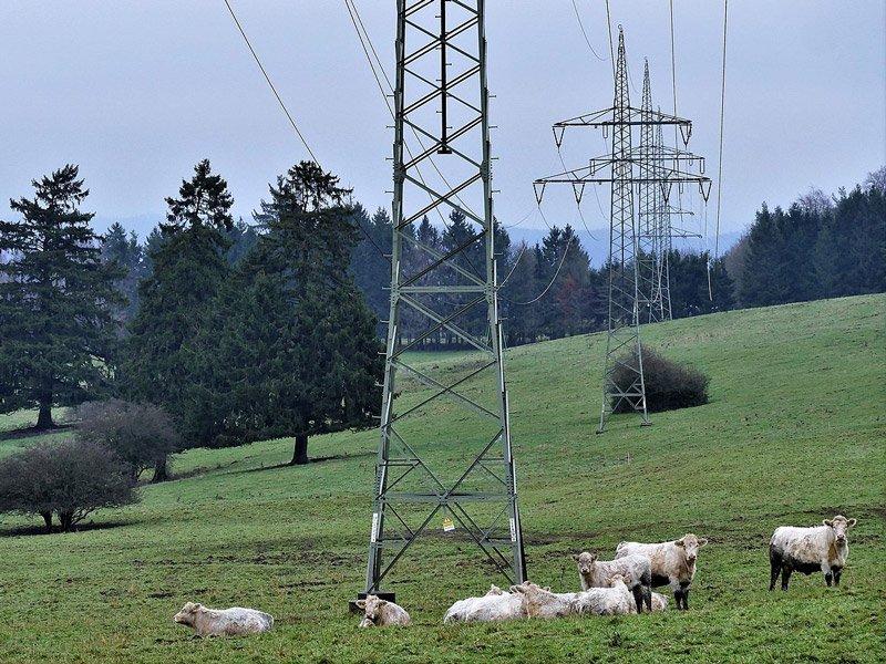 Low Frequency (ELF) Electromagnetic Fields (EMFs)